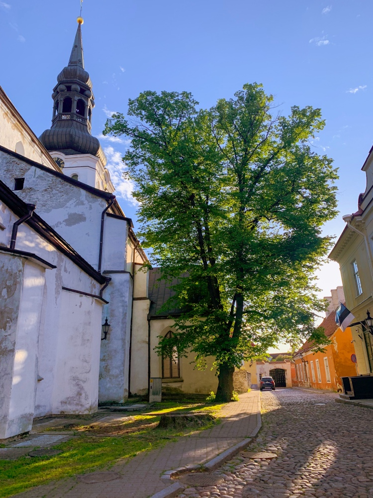 Tallinn church and tree in afternoon light